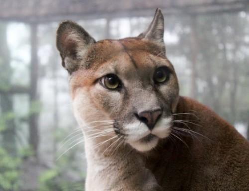 Puma scheitert in domainrechtlichem Verfahren